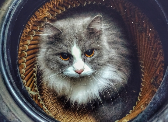 adorable-animal-basket-1697100