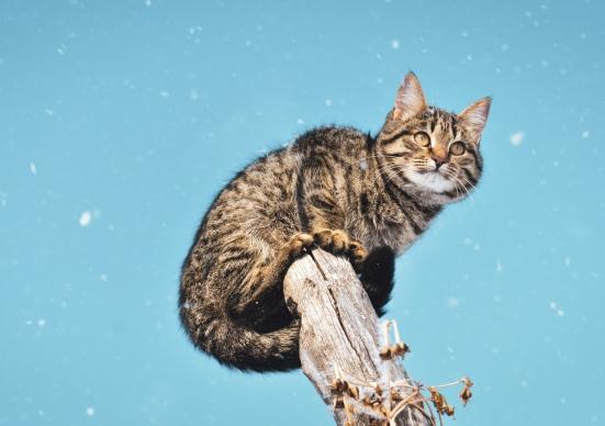 animal-animal-photography-cat-1818608