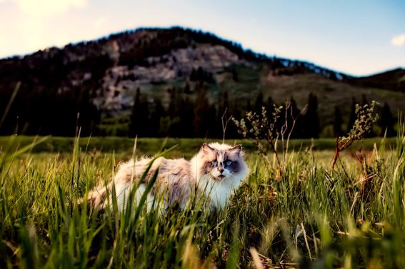 agriculture-animal-beautiful-460985