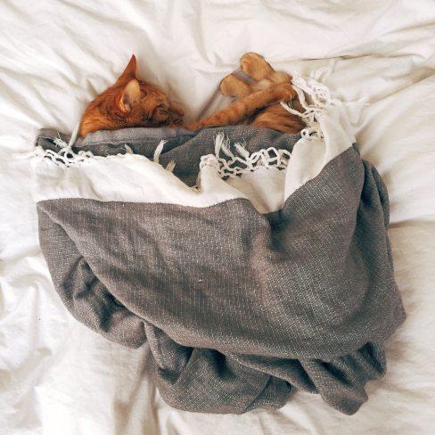 animal-bed-cat-103651