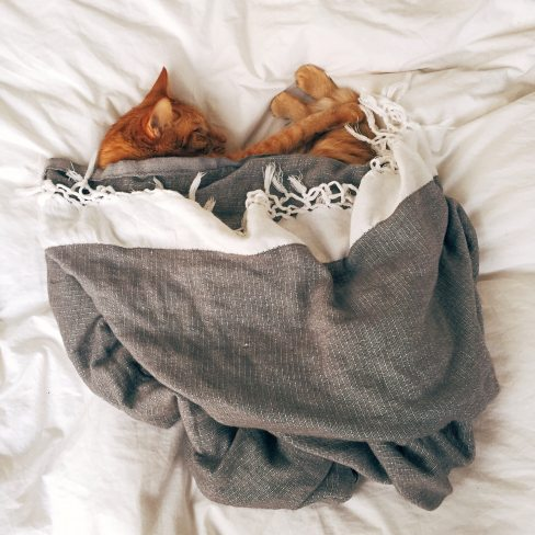 animal-bed-cat-103651